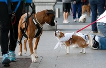 Napadalnost psa