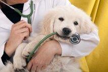 Pasji mladič pri veterinarju