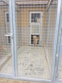 mariborsko zavetišče za živali - 5