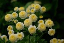 Cvetje v dežju - 16
