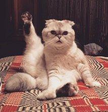 Taylor Swift mačke