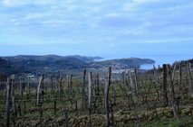 Istrski vinogradi