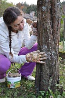 zaščita sadnega drevja