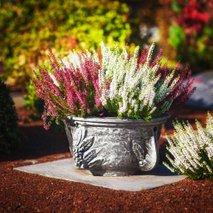 jesenske zasaditve rož na grobovih - 6
