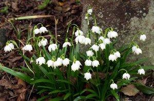 znanilci pomladi - 3