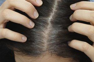 sivi lasje