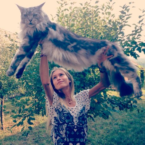 Maja Malnar in njen maincoon