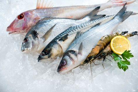 Ribe na ledu