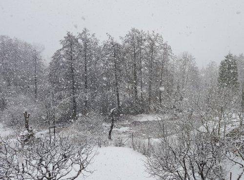 sneženje v Kočevju