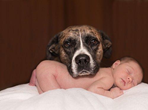 Dojenček in pes