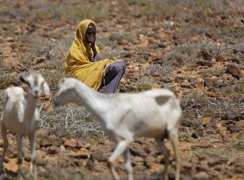 Puščava v Somaliji