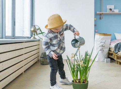 lončnica v otroški sobi