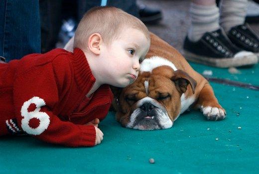 Deček in buldog