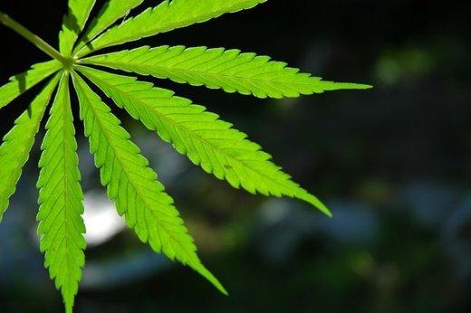 Marihuana za kožo