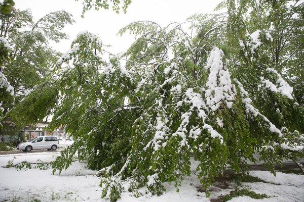 Snegolom konec aprila - 2