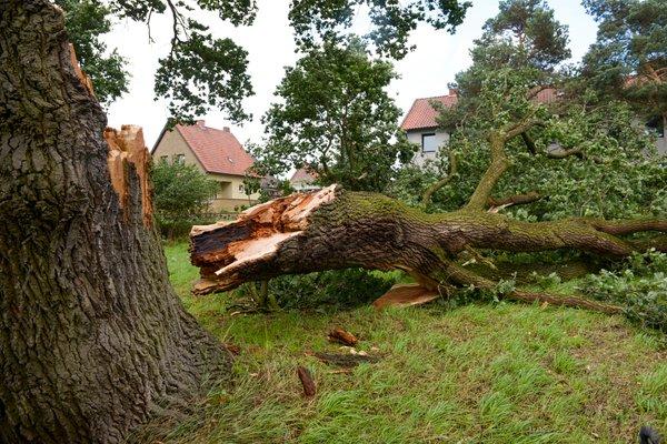 Podrto drevo