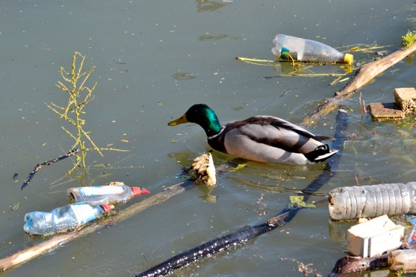 plastika v okolju