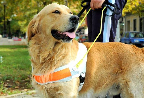 Pes vodnik