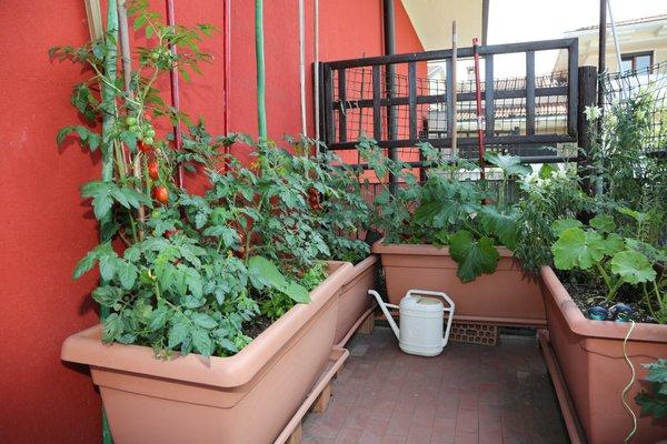 urbano vrtnarjenje