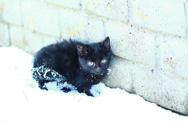 Mačka v snegu