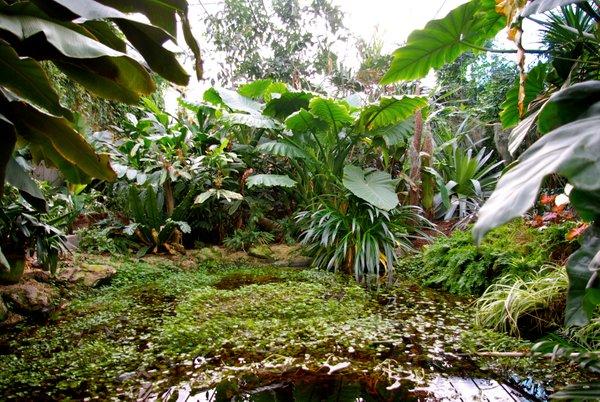 Tropski vrt v Prekmurju