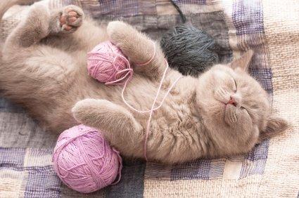 Mačka z volno