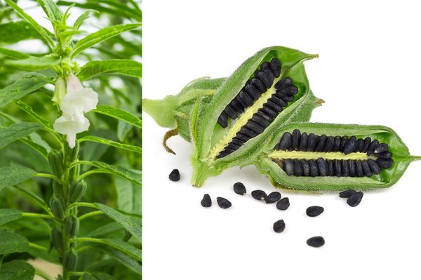 Sezamovec in semena