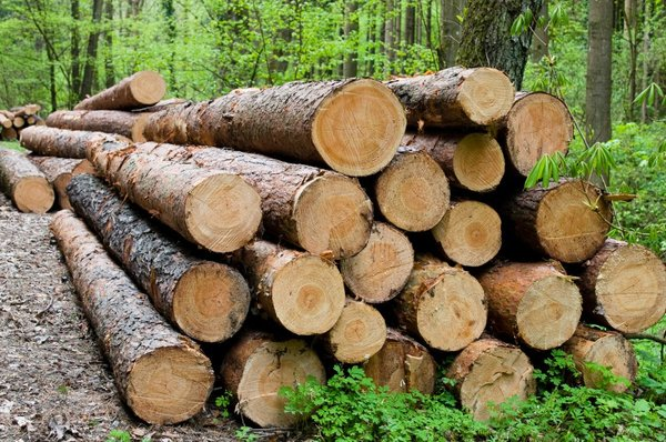 Les v gozdu