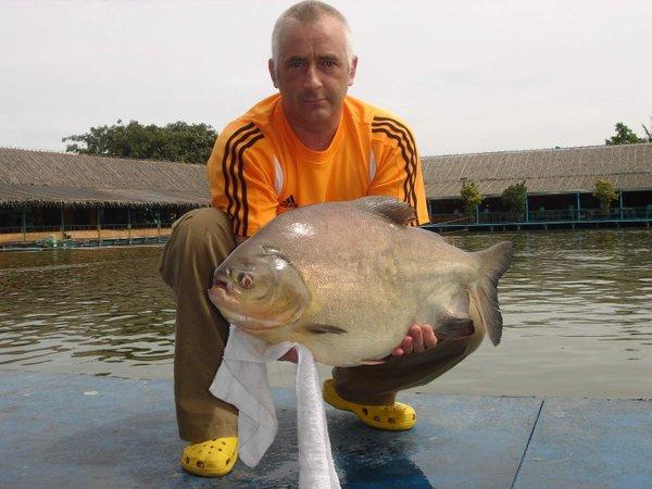 Morilska riba – napade najobčutljivejši del moškega telesa - 1