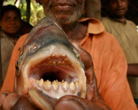 Morilska riba – napade najobčutljivejši del moškega telesa - 2