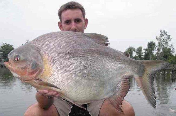 Morilska riba – napade najobčutljivejši del moškega telesa - 4