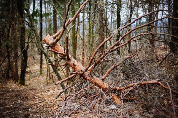 Sanacija gozda na območju Ljubljane - 19