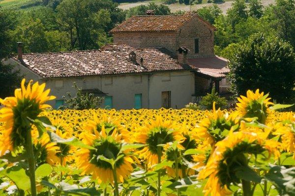 Hiša obkrožena s sončnicami
