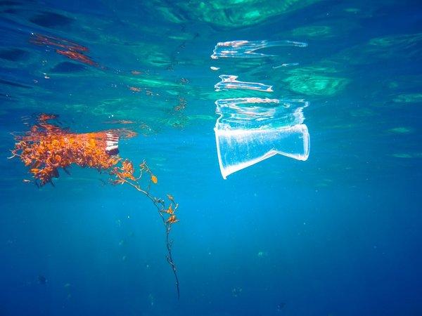 Plastični kozarec v morju