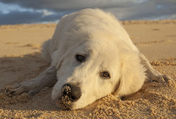 Pes na plaži