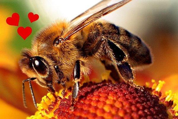 Čebele imajo čustva - 2
