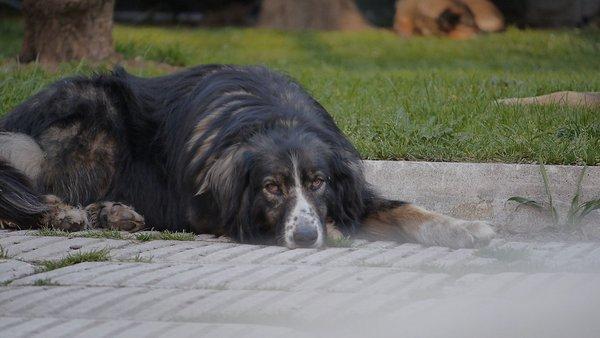 potepuški psi v Sarajevu