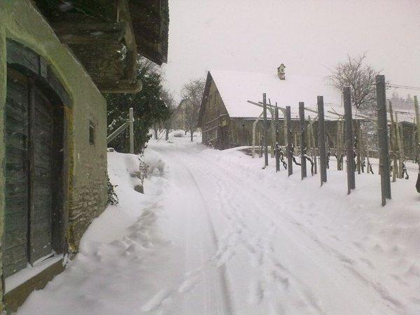 Sneg v Pavli vasi-1