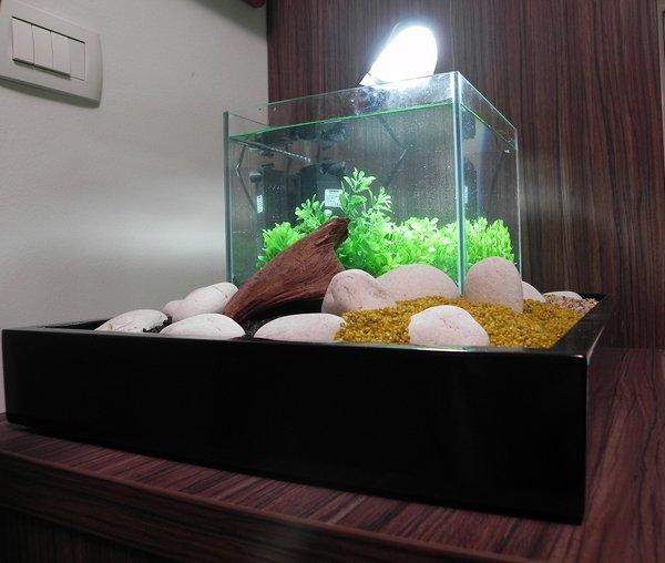 Akvarij po metodi feng šuj