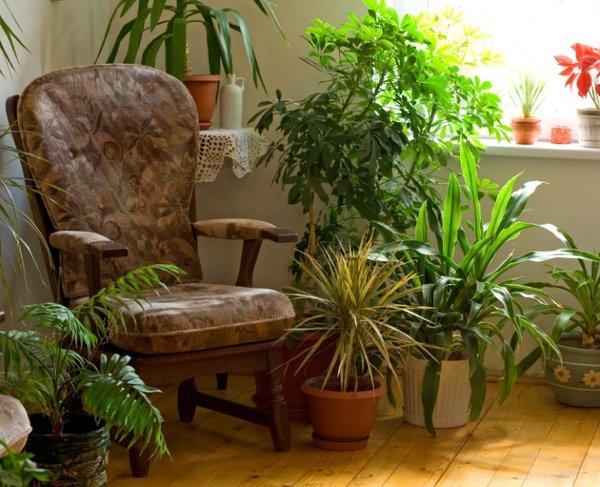 Sobne Rastline Sobne Rastline Zeleni