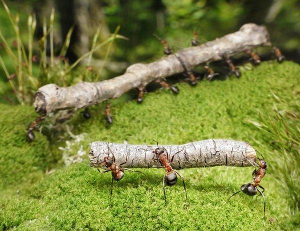 Mravlje na vrtu