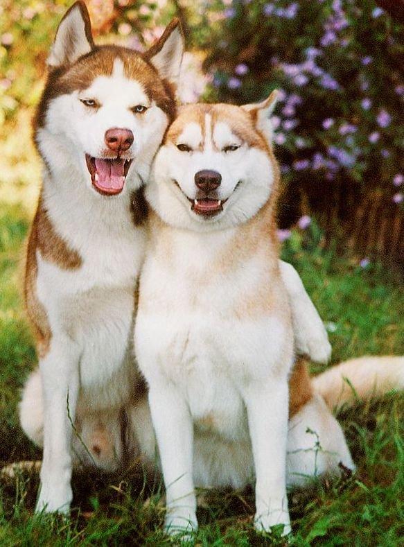 Pes in psička