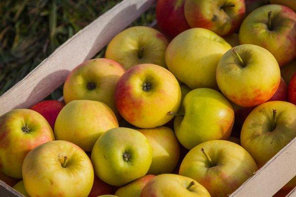 Domača jabolka