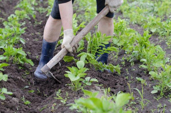 odstranjevanje plevela