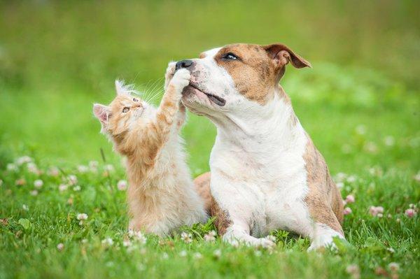 Kako zaščititi ljubljenčka pred zajedavci?