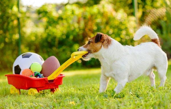 Pes med igro