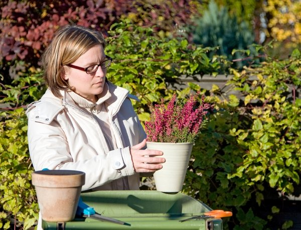 priprava okrasnega vrta na zimo