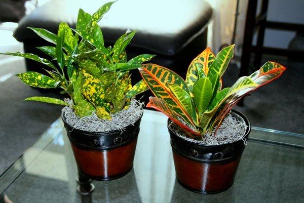 Sobne Rastline Sobne Rastline Pozimi