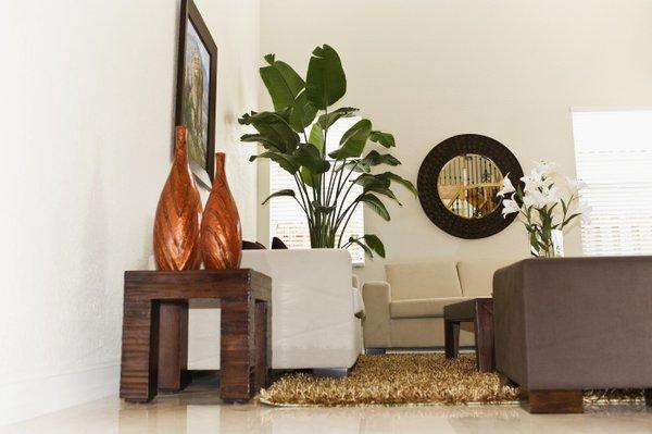 Sobne rastline v modernem stanovanju