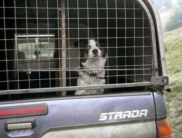 Pes v kovinskem transporterju